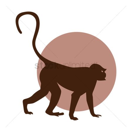 Zoos : Silhouette of a monkey