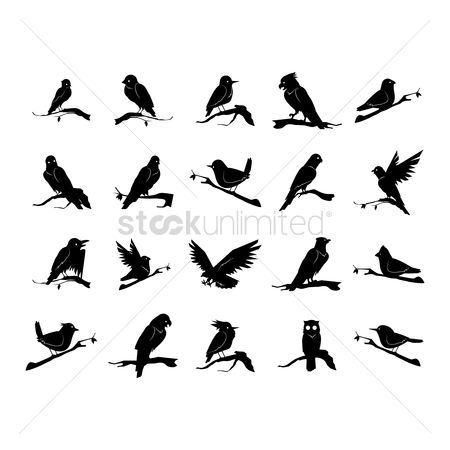 Hawks : Silhouette of bird