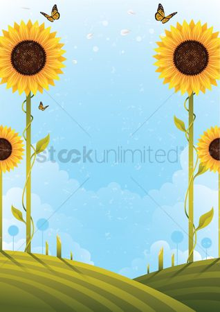 Budding : Sunflower poster design