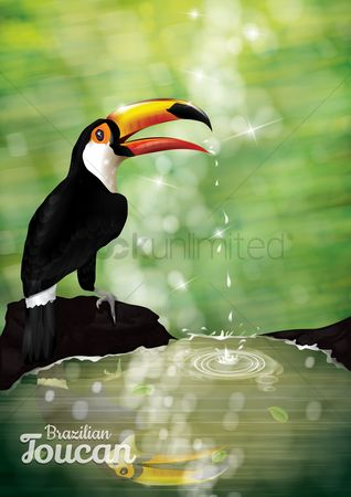 Water drops : Toucan poster
