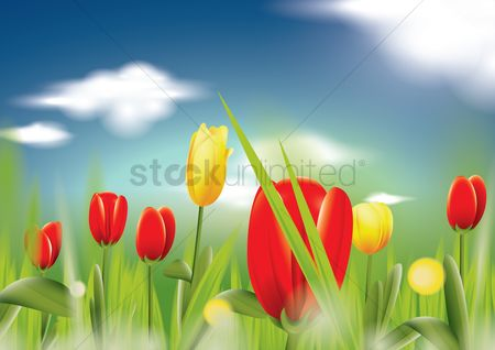 Fresh : Tulips background