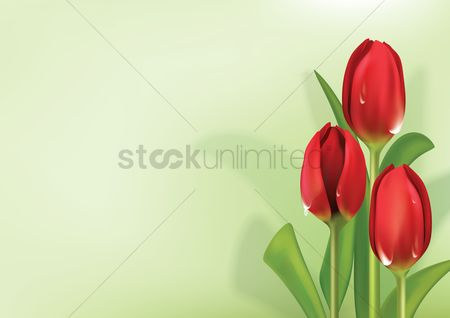 Copy space : Tulips background