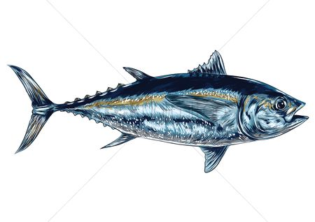 Marine life : Tuna fish