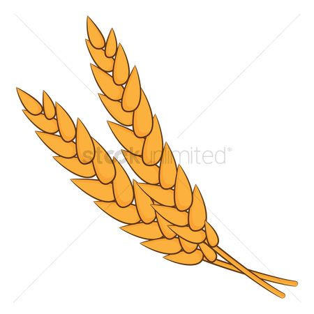 Flour : Wheat