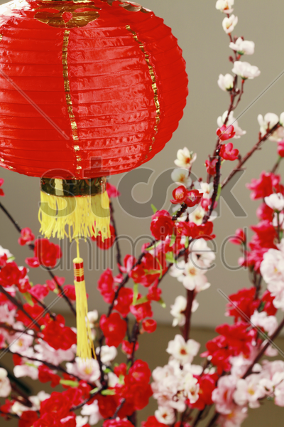 chinese lantern with plum blossom in the background stock photo
