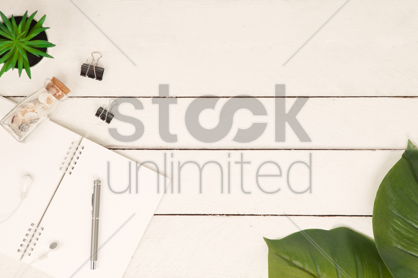 flatlay of white background with plants and seashells stock photo