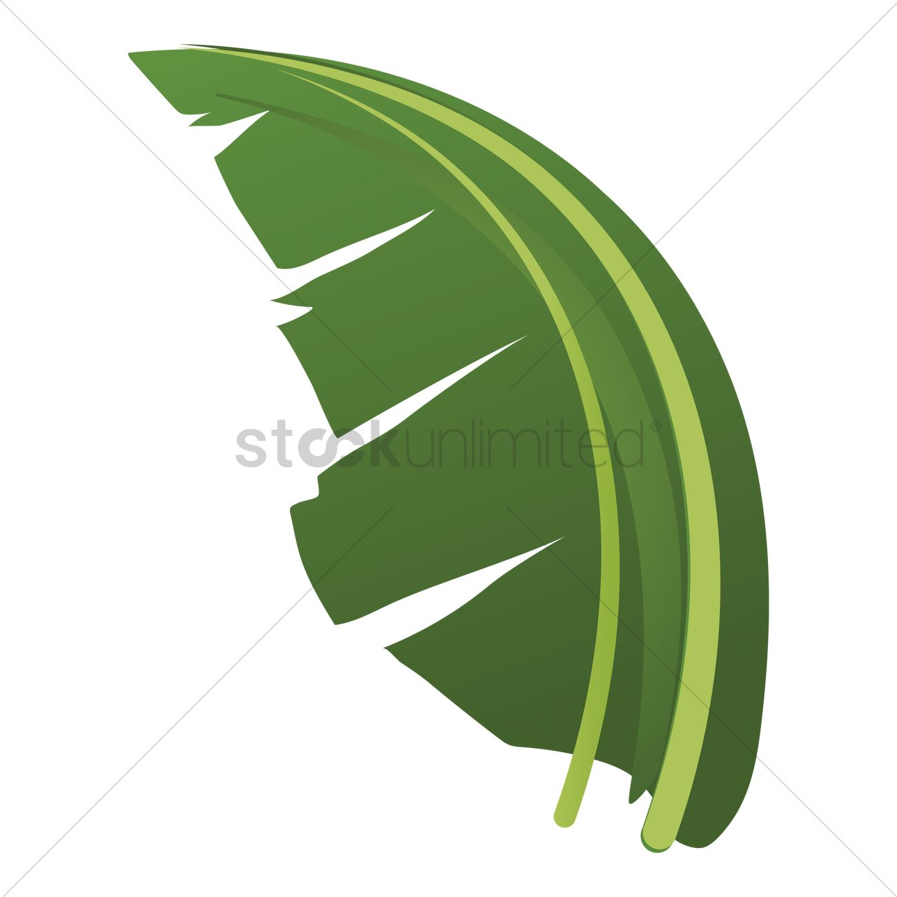 Banana Leaf Vector Graphic