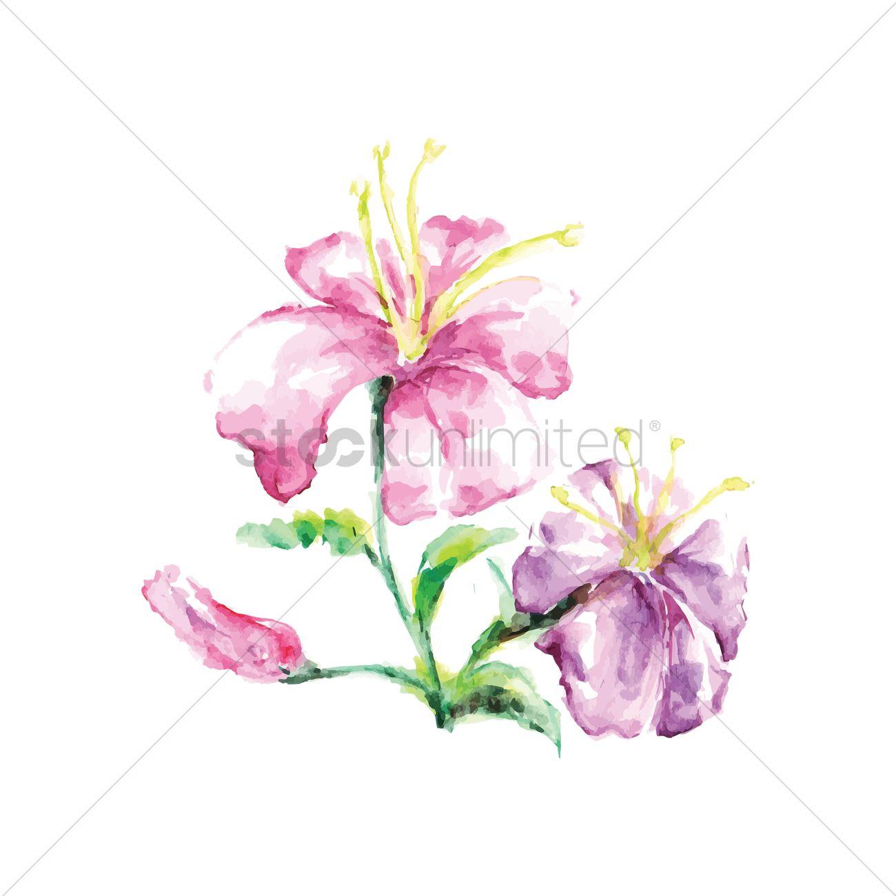 Hibiscus Flower Vector Image 1611146 Stockunlimited