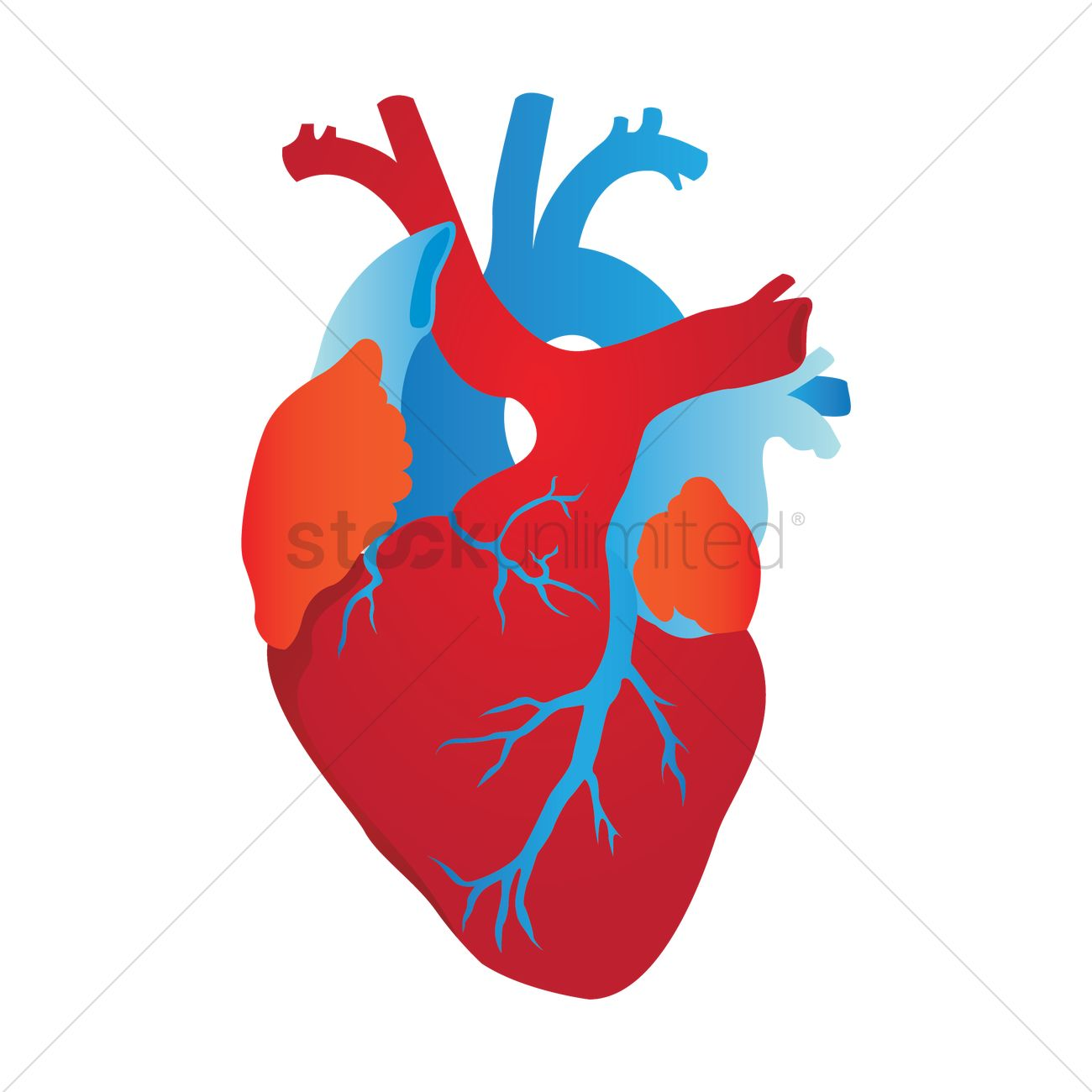 human heart vector image 1866826 stockunlimited rh stockunlimited com human heart vector png human heart vector icon