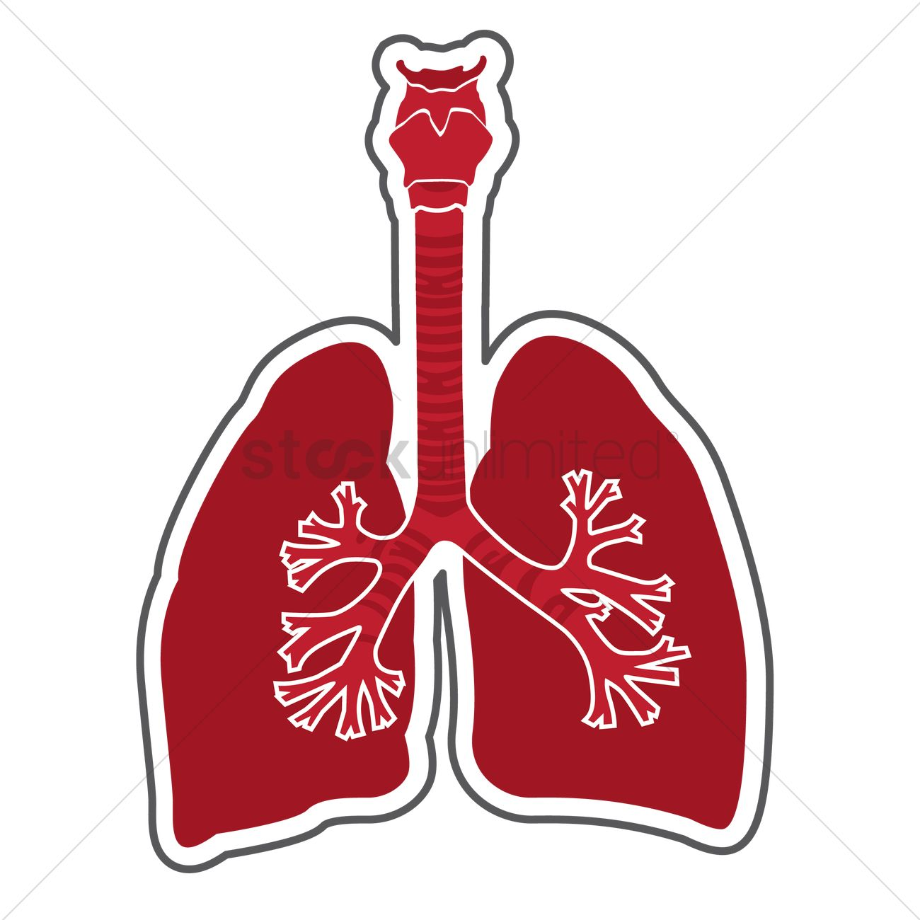 Human lungs Vector Image - 1979862 | StockUnlimited