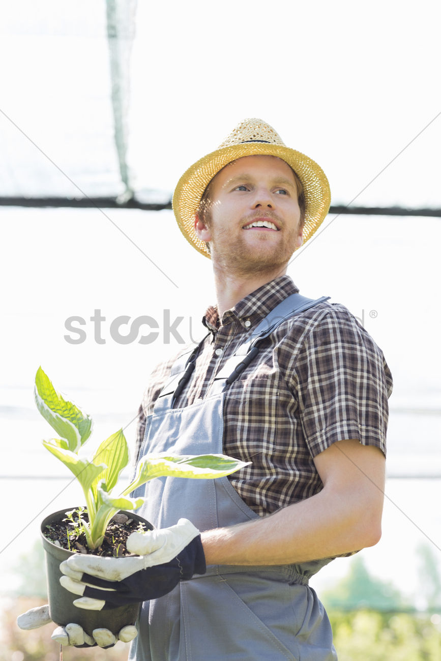 Male Gardener Looking Away While Holding Potted Plant At Greenhouse Stock Photo