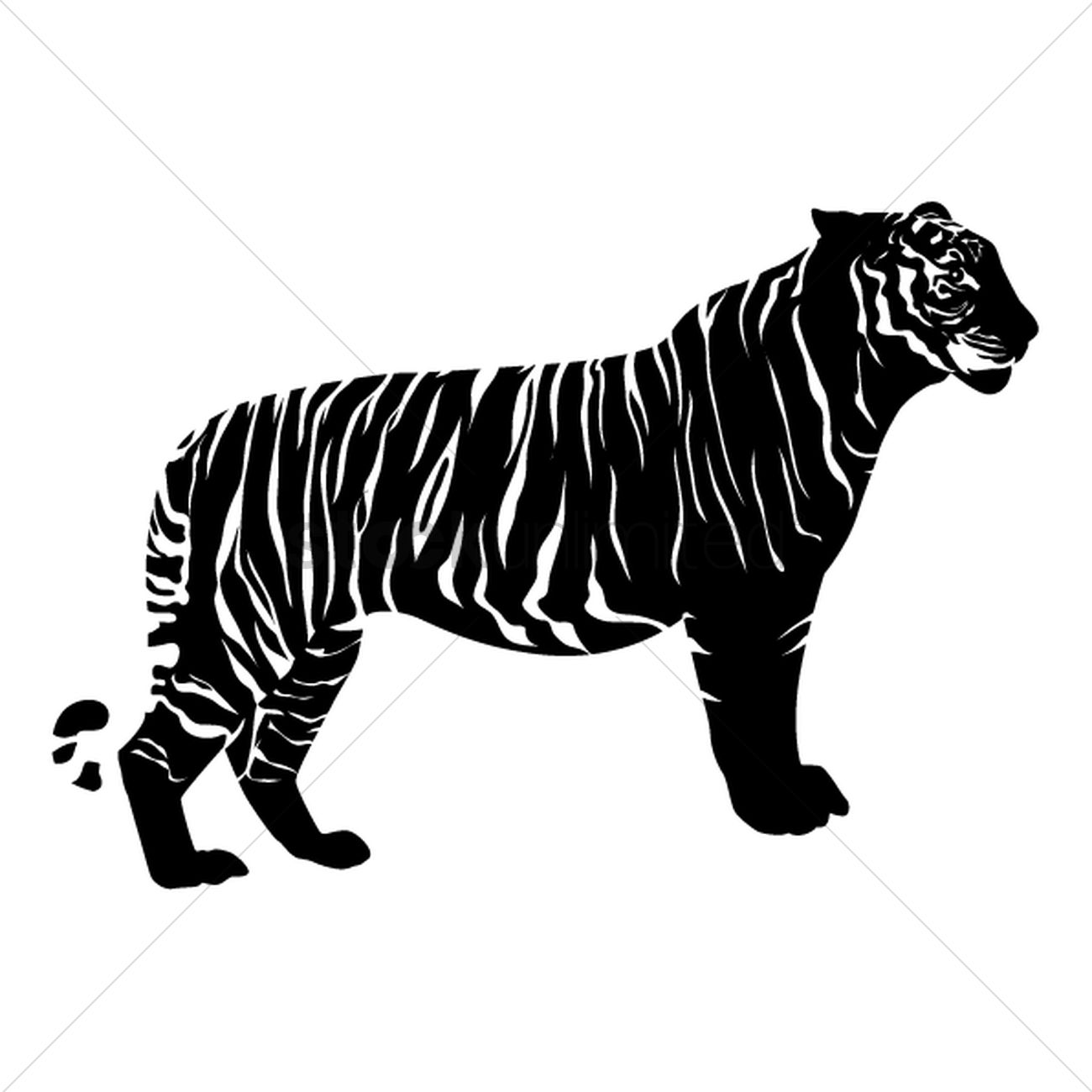free tiger vector image 1501226 stockunlimited