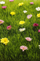 Flowers scattered on grass