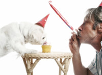Man playing with blowout while his dog is eating birthday cake