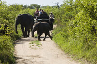 Two elephants crossing road jeep with tourists in background