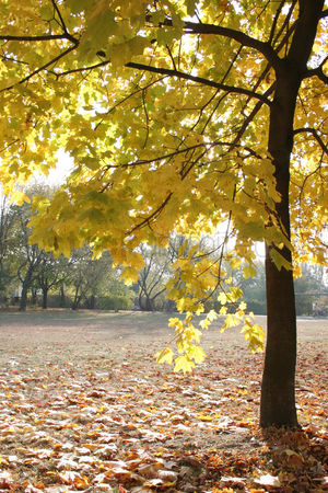 Beautiful : Autumn colors in the park