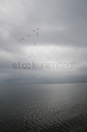 Large group of animals : Birds flying over a river  tirupati  chittoor district  andhra pradesh  india