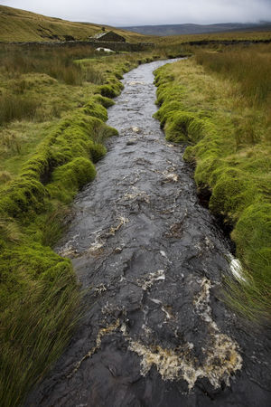 Grass : Brook in yorkshire dales yorkshire england