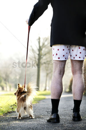 Outdoor : Businessman in boxer shorts walking his dog