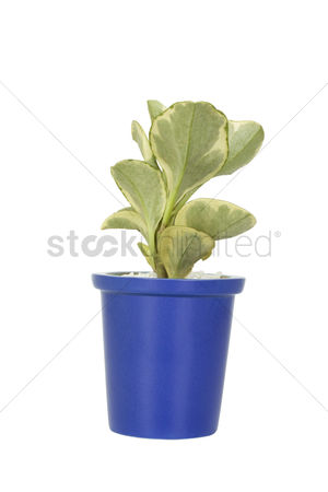 Houseplant : Close-up of a potted plant