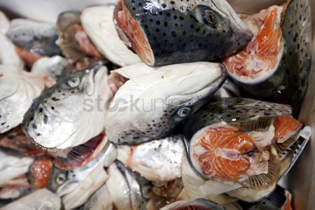 Large group of animals : Close-up of chopped fishes in market