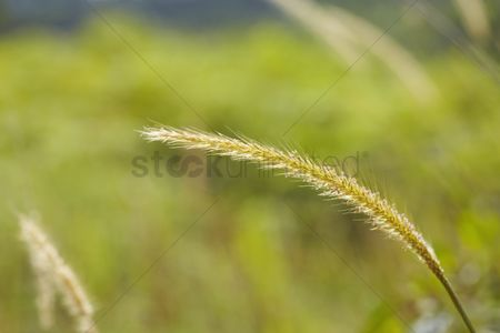 Texture : Close-up shot of wheat head