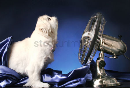 Alert : Dog looking up while standing in front of a table fan