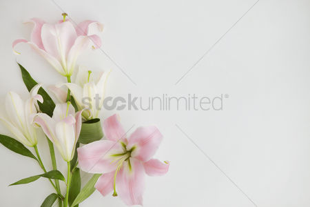 Blossom : Flatlay of white background with lily flowers