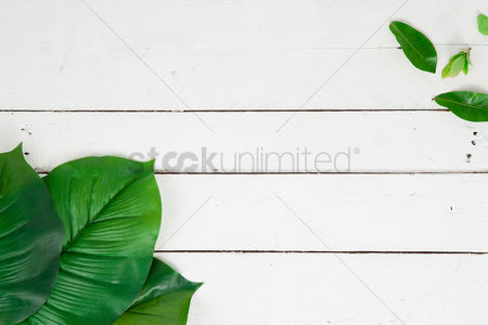 Blank : Flatlay of white background with plants and leaves