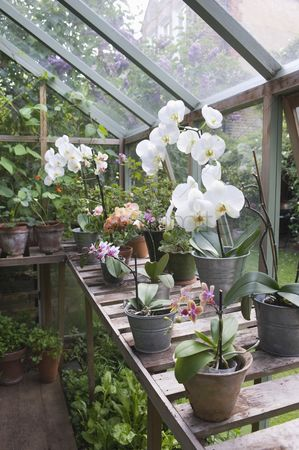 Greenhouse : Floweing orchid on greenhouse workbench