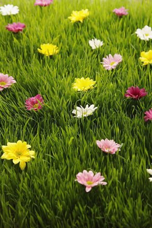 Grass : Flowers scattered on grass