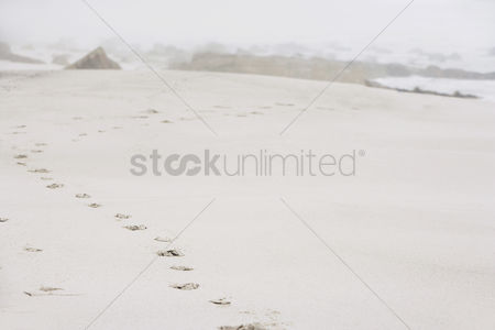 Land : Footprints on sand at beach