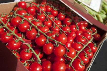 Supermarket : Fresh tomatoes on display at store