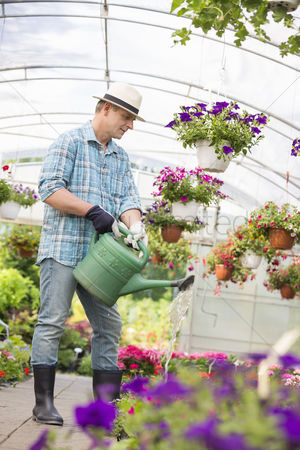 Greenhouse : Full-length of man watering flower plants in greenhouse
