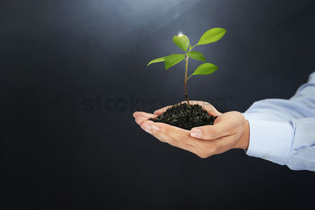 Finger : Hands holding a seedling plant