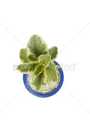 Houseplant : High angle view of a potted plant