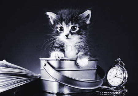 Conceptual : Kitten in a bucket