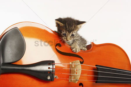 Conceptual : Kitten playing with violin