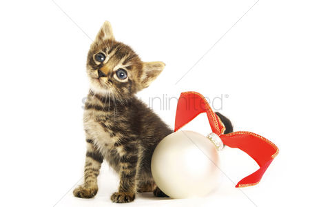 Alert : Kitten sitting beside a christmas ornament