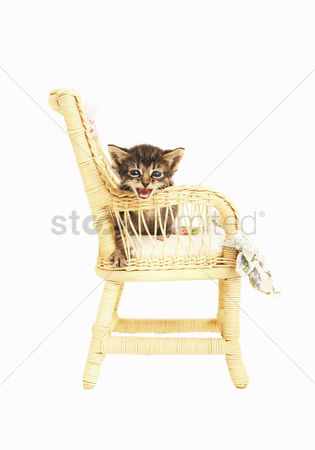 Alert : Kitten sitting on a chair