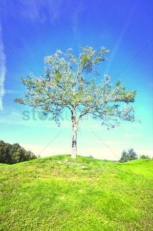 Spring : Lone tree in field