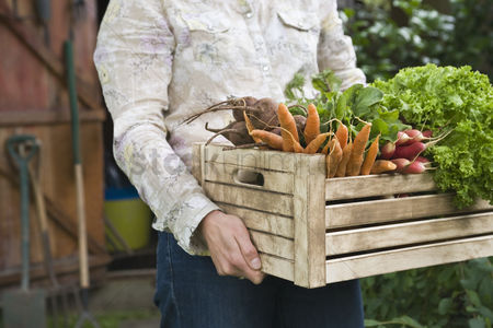 Garden : Man carrying crate of vegetables mid section