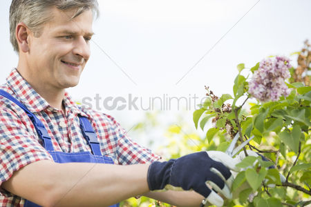 Apron : Man cutting branches at garden