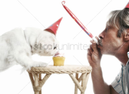 Celebrating : Man playing with blowout while his dog is eating birthday cake