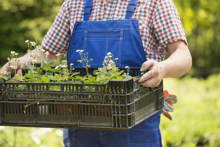 40 44 years : Midsection of man holding crate of potted plants at garden