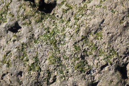 Weathered : Moss on rock