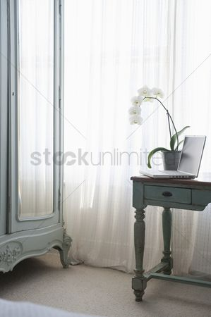 Houseplant : Orchid and laptop on table at window
