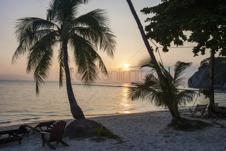 Natural : Palm trees and deck chairs on beach at sunset koh pha ngan thailand
