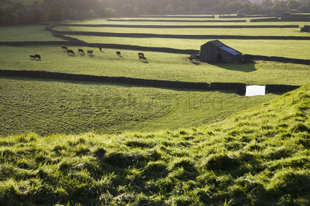 Land : Pasture in yorkshire dales yorkshire england