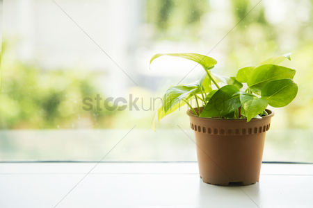 Decor : Potted plant by a glass window